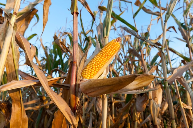Сельскохозяйственное поле Premium Фотографии