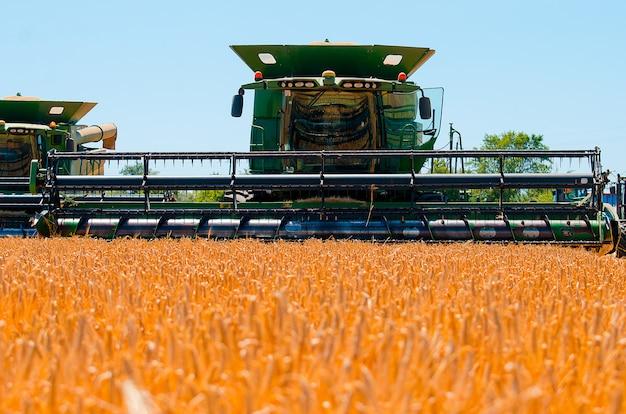 Сельскохозяйственная техника собирает урожай желтой пшеницы в открытом поле в солнечный яркий день Premium Фотографии