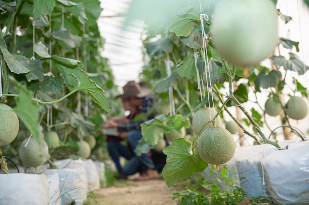 Agricultural researcher with the tablet slowly inspect plants. Free Photo