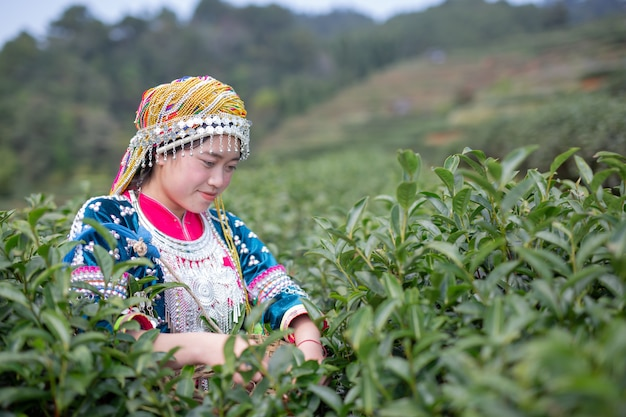 Agriculture of hilltribe women Free Photo