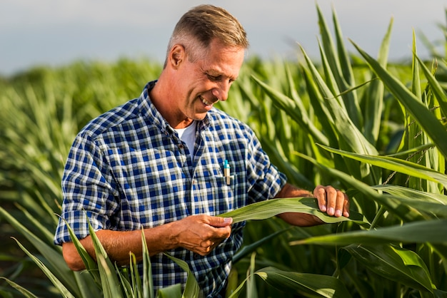 Agronomist attentively inspecting a corn leaf Free Photo