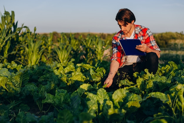 Agronomist in a field taking control of the yield and regard and touches a plant Premium Photo