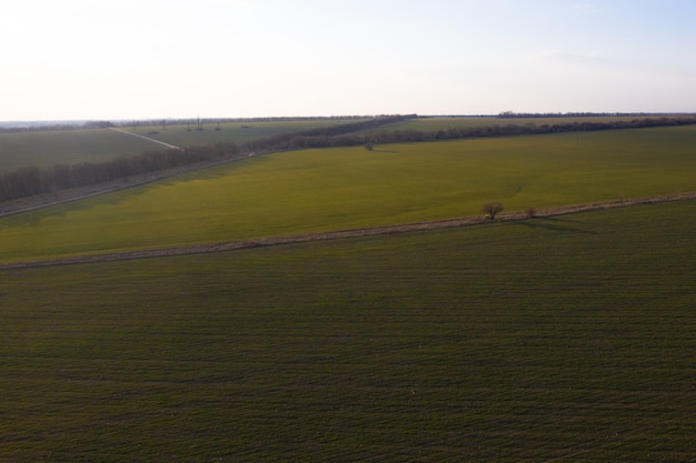 Airbrush photography of a green field from a height. blue sky. Premium Photo