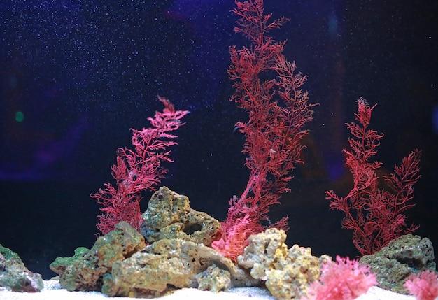 Alga and corals in aquarium tank Premium Photo