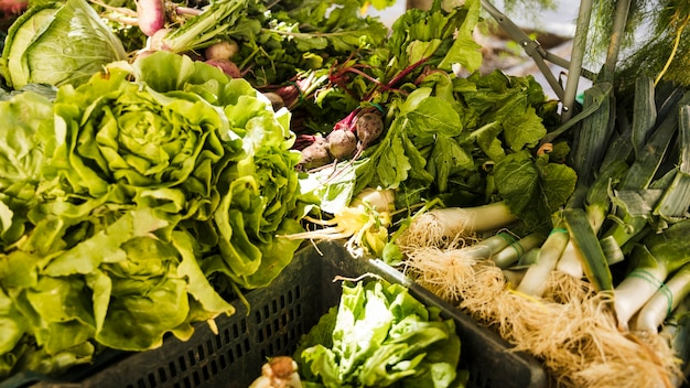 All kinds of fresh green vegetable in plastic crate Free Photo