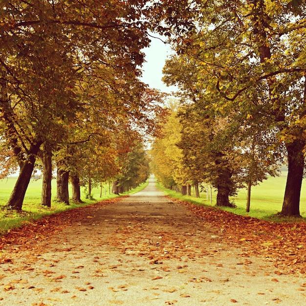 «элли среди деревьев осенью» Бесплатные Фотографии