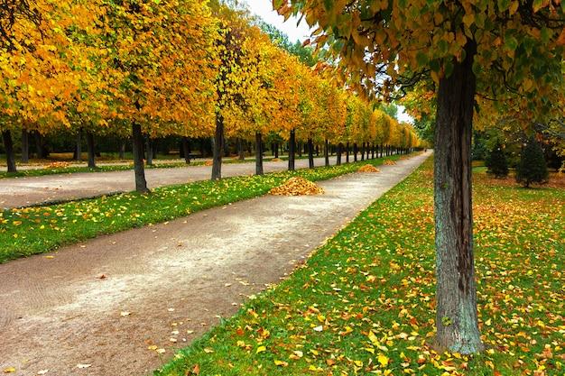 秋の葉で覆われたフィールドのある公園の路地 Premium写真