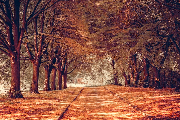 Alley in a park. september day Premium Photo