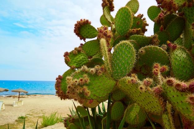 Almeria mojacar beach mediterranean sea spain Premium Photo