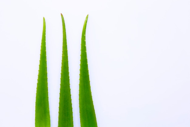 Aloe vera fresh leaves on white Premium Photo