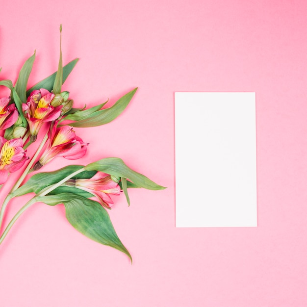 Alstroemeria flower and blank white card on pink background Free Photo