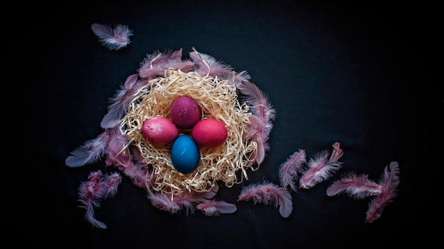 古典的な青とピンクの色の卵、黒い表面上の年配の女性の羽と手、春の季節の休日の概念と暗いスタイルの代替イースター構成 Premium写真