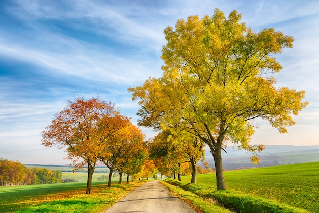 Amazing autumn landscape of country road with colorful trees and blue sky with green grass in south moravia region, czech republic. Premium Photo
