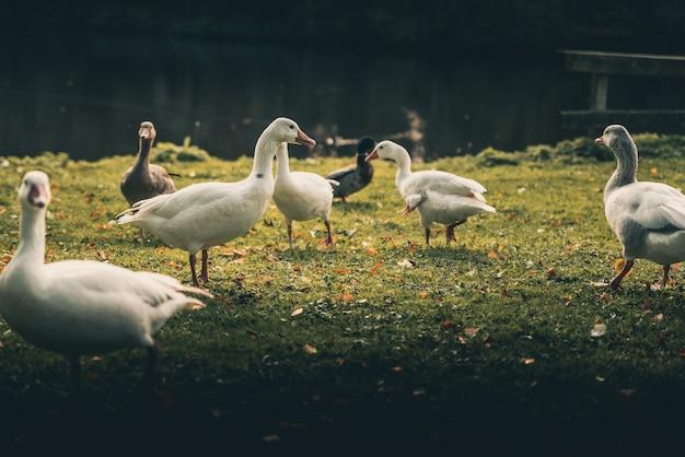 Anatre incredibili intorno a un lago Foto Gratuite