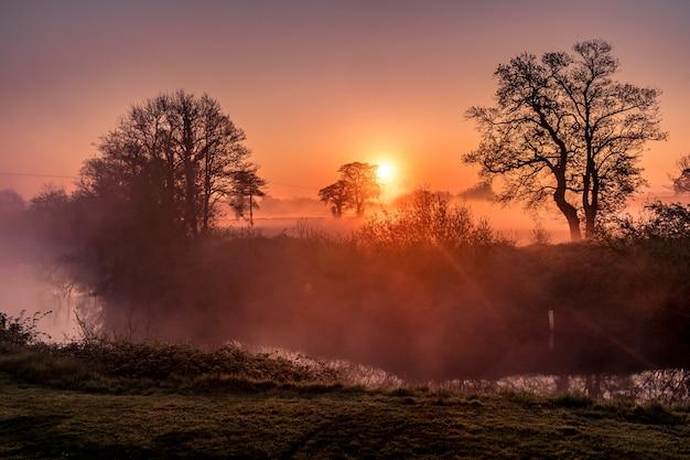 Удивительный лес и закат Бесплатные Фотографии