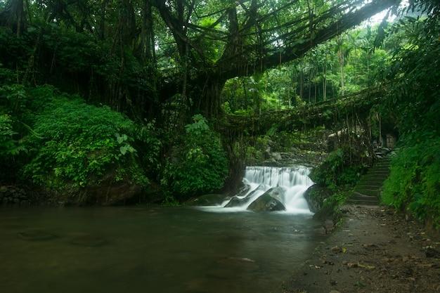 美しい自然に囲まれた小さな滝の素晴らしいショット 無料写真