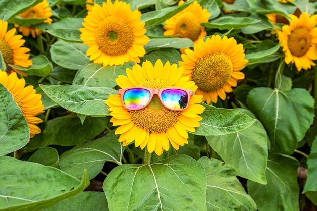 Amazing sunflower field with beautiful Premium Photo
