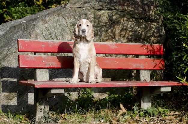 赤いベンチに座っている穏やかな子犬の素晴らしい景色 無料写真