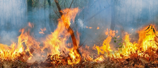 Amazon rain forest fire disaster is burning at a rate scientists have never seen before. Premium Photo