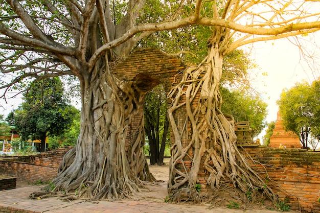 와트 Phra Ngam 사원, 아유타야, 태국에서 고 대 문. 프리미엄 사진