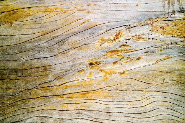 Ancient old hard wood surface was crack by sunlight rain Premium Photo