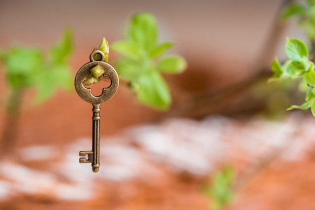 Ancient vintage key on a tree branch, green young leaves. spring and summer vision Premium Photo