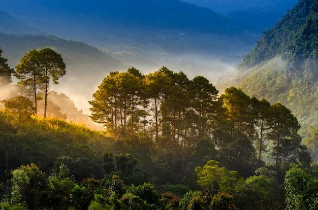 森の朝は霧の海ang khang chiang mai thailandを持っています Premium写真