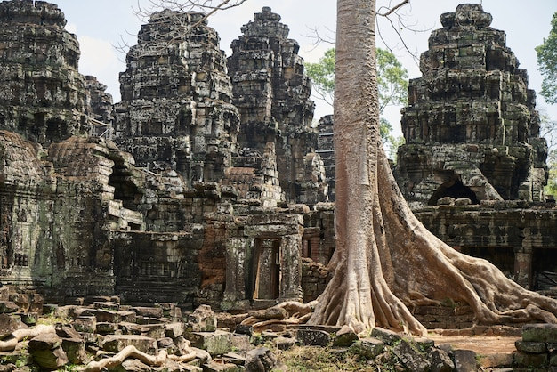 Angkor wat temple and trees Free Photo