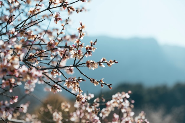 Angle view blooming branches  with copy-space Free Photo