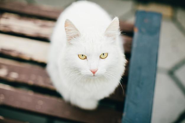 動物のクローズアップ:曇りの日に茶色の木製ベンチに屋外に座って悲しい黄色目と白猫の写真 Premium写真