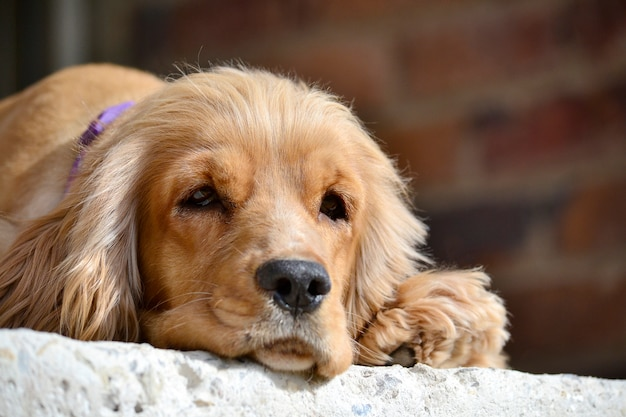 かわいい動物の犬の友人のブラウン 無料写真