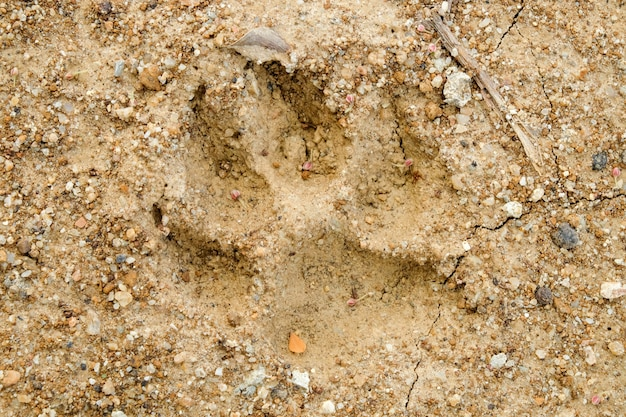 Animal footprints on abstract background rift of soil climate change and drought land. Premium Photo