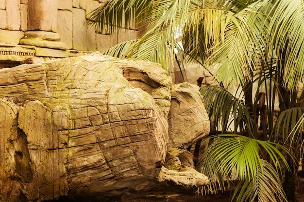 Animal habitat Free Photo
