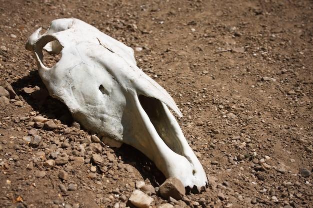 動物の頭蓋骨 Premium写真