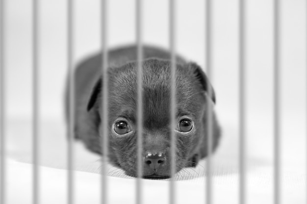 Animal welfare and protection concept. cute dog puppy is locked in the cage. Premium Photo