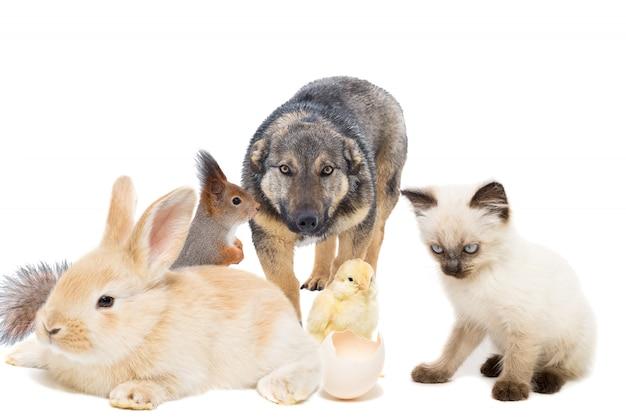 Animals on a white background Premium Photo