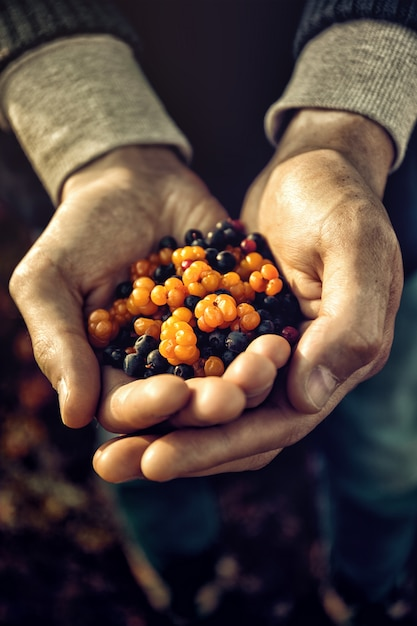 Anonymous person holding mixed berries Free Photo