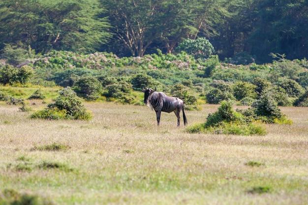 ケニアでのカモシカヌーの移動 無料写真