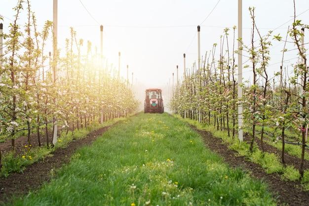 Produzione di frutta da meleto Foto Gratuite