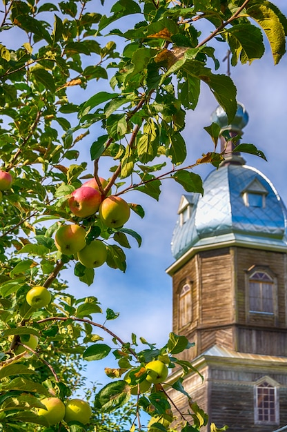 Apple tree on the background of a wooden church in russia. religious holiday. Premium Photo