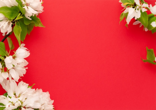 Apple tree blossom branch red pink background flat lay. white flowering buds top view template long web banner. copy space backdrop mockup design. floral spring frame fresh flowers invitation concept Premium Photo