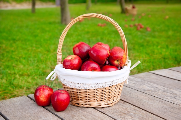 Apples in basket on a grass trees field Premium Photo