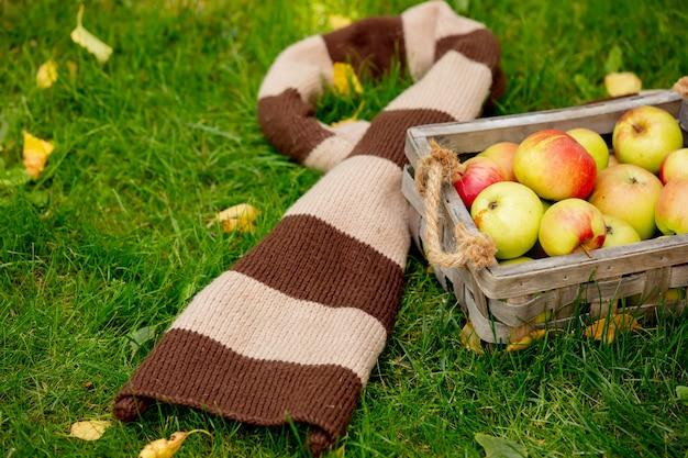 かごの中のリンゴと庭の緑の芝生の上のスカーフ。 Premium写真
