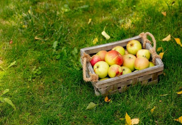 庭の緑の芝生の上のバスケットにリンゴ。 Premium写真
