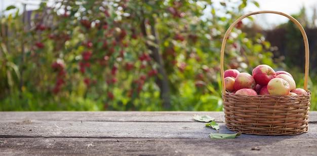 リンゴの木の上の日光の下で木製のテーブルの籐のバスケットにリンゴ Premium写真