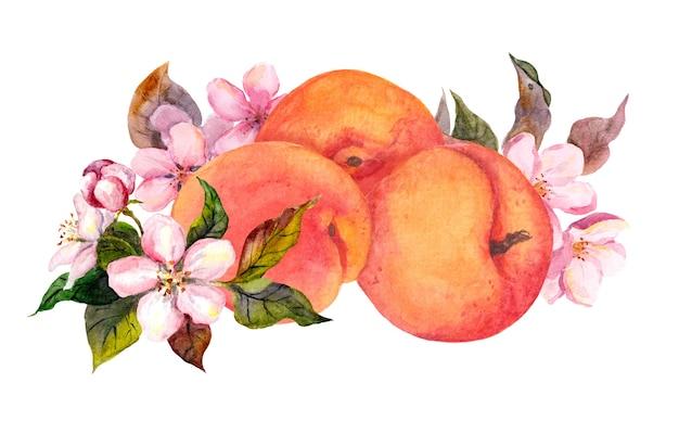 アプリコットの果実と花の花。水の色 Premium写真
