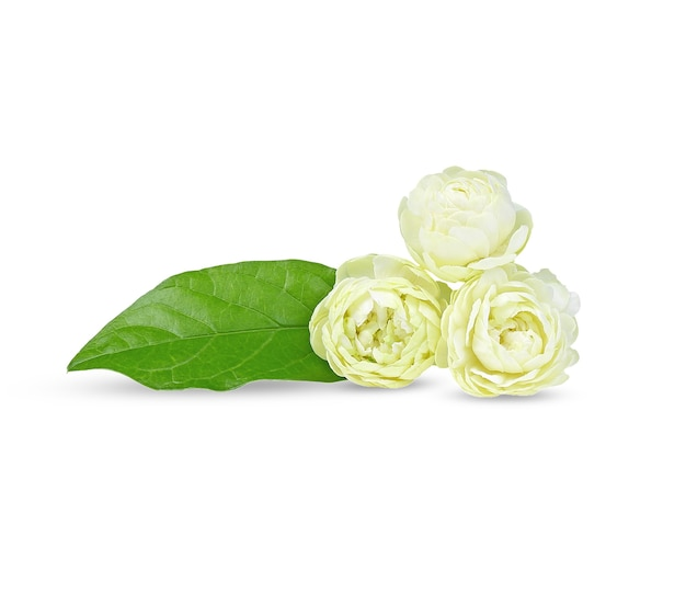アラビアンジャスミン、白い背景の香りの花。 Premium写真