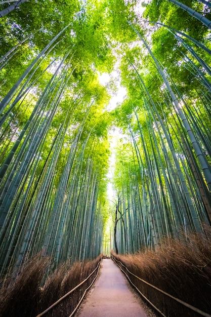 Красивый пейзаж бамбуковой рощи в лесу в arashiyama kyoto Бесплатные Фотографии