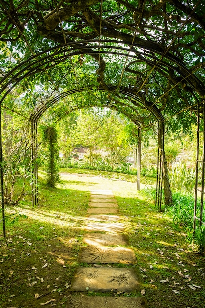 Arch green soft natural pathway Premium Photo