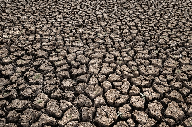 Arid land with dry and cracked ground, global warming Free Photo